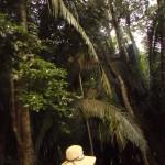 Rain Forest, Lamanai, Belize