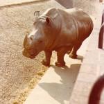 London Zoo - Hippo