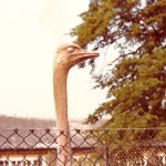 London Zoo - Peekaboo