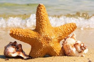 SEA SHELLS & STAR FISH
