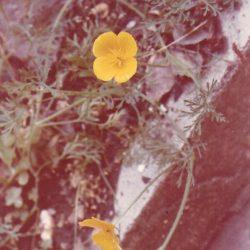 Leigh-on-Sea - Flower in an English Garden