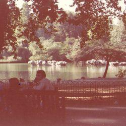 St. James Park 1976